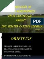 Tecnologías del INIA en manejo de arroz Resultados de parcelas demostrativas en campo de productores de arroz  Lambayeque.