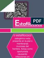 2. Estafilococo