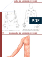 Dissecacao Do Membro Superior