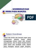 Sistem Koordinasi Dan Indra Pada Manusia1