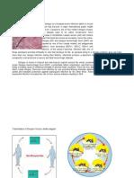 Anatomy Dengue