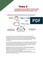 Las enzimas de restricción cortan el DNA en sitios de secuencia específica