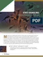 STAT3 Signalling
