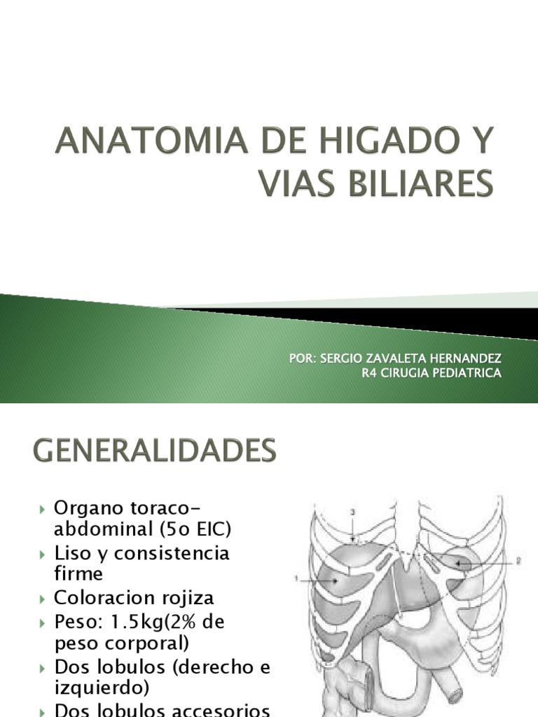 Anatomia de Higado y Vias Biliares