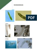 VISU MICROOBIOLOGÍA