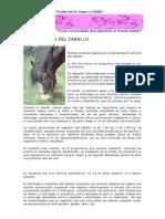 03_alimentacion Del Caballo