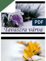 tavaszra_varva_judy
