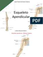 2.1- Esqueleto Apendicular Superior e Inferior