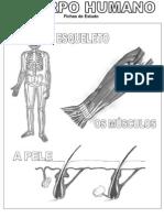Fichas Estudo-CorpoHumano