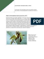 Principales Especies Plagas Del Camu Camu