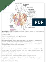 Arteria Vertebral - Sdr.bulbar
