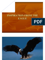 Inspiration From the Eagle