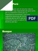 Bosque Pe..[1]