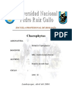 Charophytas