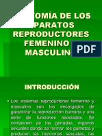 02.- ANATOMÍA DE LOS SISTEMAS REPRODUCTORES FEMENINO Y MASCULINO