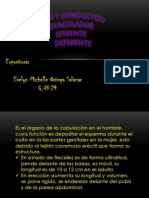Histologia Expo p.