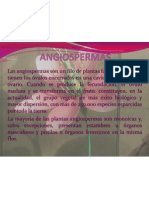 Angiosperm As