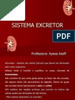 SISTEMA-EXCRETOR