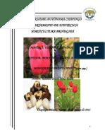 Monografia Tulipan (Tulipa Spp