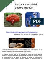 Beneficios Del Gonoderma Imp