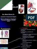 Estructura y Funcion-sistema Vascular