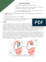 Anatomía del Aparato Reproductor Femenino 2010