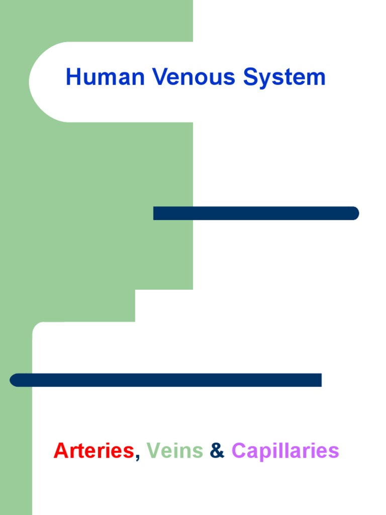 Human Venous System Vein Artery