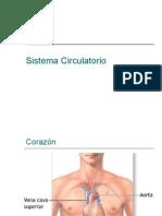 Sistema Circulatorio----