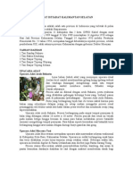 Adat Istiadat Kalimantan Selatan