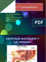 Genitales Masculinos y Las Hernias