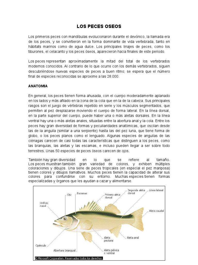 Los Peces Oseos, Claves Dicotómicas y Peces Comunes en el Perú