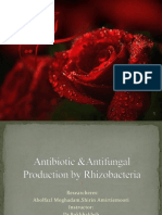 Antibiotic Production by Rhizobacteria