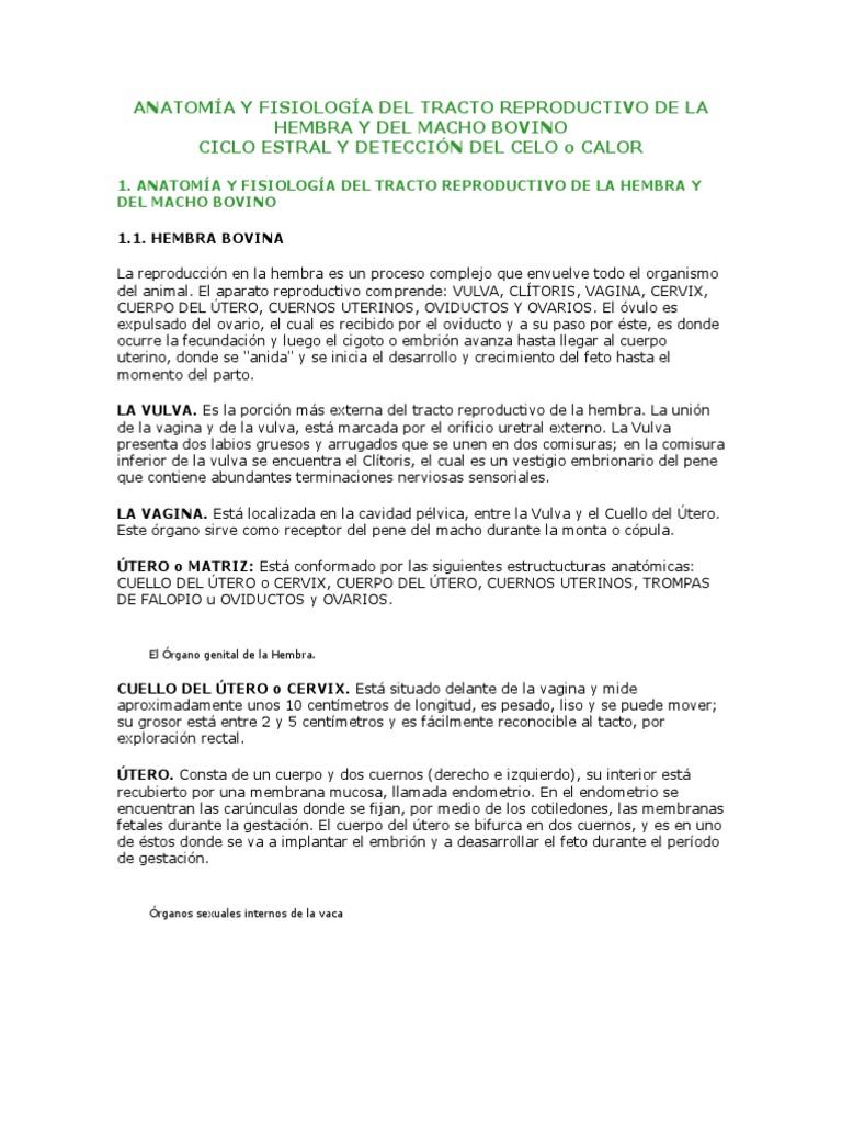 ANATOMÍA Y FISIOLOGÍA DEL TRACTO REPRODUCTIVO DE LA HEMBRA Y DEL ...