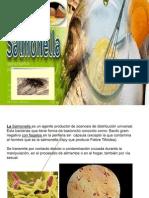presentación salmonella