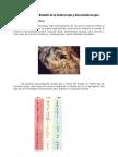 Modulo v Grafoscopia y Estudio de Documentos Final