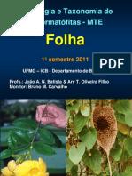 MTE Aula 3 Morfologia Folha 1oSem2011