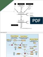 Complemento y Estrategias Bacterianas