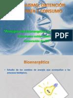 METABOLISMO Y OBTENCIÓN DE ENERGÍA Y CONSUMO