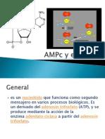 AMPc y el GMPc