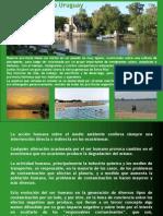 Link No a Las Papeleras - ContaminaciondelRioUruguay