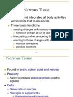 Nervous System ( 26/10)