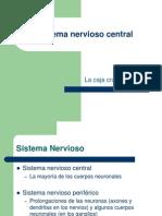Sistema nervioso_sensorial