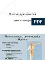 Sistema Nervoso - Apresentação