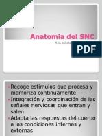 Anatomia Del SNC