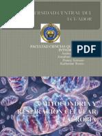 diapositivas biologia mitocondria