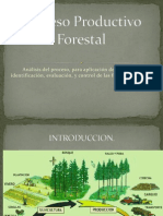 Proceso Productivo Forestal PPT