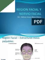 Region Facial y Nervio Facial 1223175506407030 8