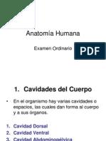 Anatomía Humana examen ordinario