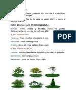 Modulo Botanica Segunda Parte