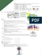 Fact Sheet Cell Bio